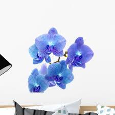 blue orchid wall decal by wallmonkeys peel and stick graphic 24 blue orchid wall decal by wallmonkeys peel and stick graphic 24 in w x 21 in h wm190497 walmart com