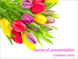 bunch of tulip flowers powerpoint template u0026 backgrounds id