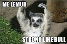 Lemur Meme - lemur meme work pinterest lemur meme and memes