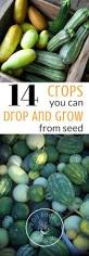 14 crops you can drop and grow from seed you should grow