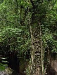 living bridges made of trees in india youtube bridges