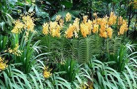 Home Landscape Design Premium Nexgen3 Free Download Yes Landscaping Custom Design Your Landscape Gardens In Malaysia