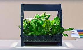ikea launches indoor garden that can grow food all year round