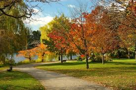 fall foliage sightseeing in toronto parks toronto now