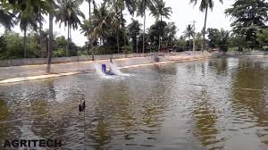 small scale fish farming in india tilapia rohu grass carp