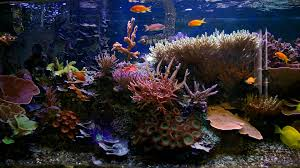 Beautiful Home Fish Tanks by Glass Fish Tanks