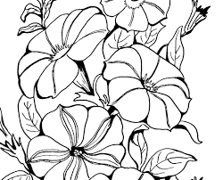 awesome free petunia flowers coloring pages for kids coloring7 com