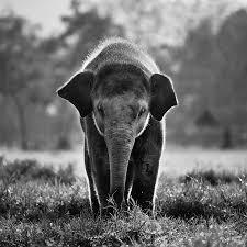 use feng shui get elephant journal