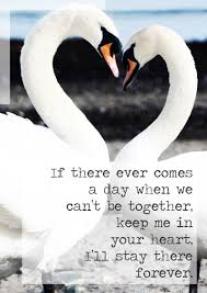 Cute In Love Quotes by Winnie The Pooh Love Quote And Cute Swans Lace And Buckles L U0026b
