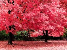 17 best colorful trees images on colorful trees