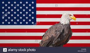 Bald Eagle On Flag Symbols America Flag Bald Eagle Stockfotos U0026 Symbols America Flag