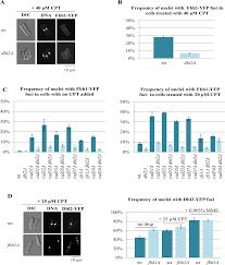 plos genetics dbl2 regulates rad51 and dna joint molecule