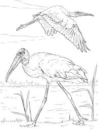 wood storks coloring free printable coloring pages