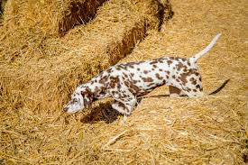 easy to spot action dog sports barn hunt trials jan 24th u0026 25th