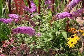 Fafardflowering Shrubs For Fall