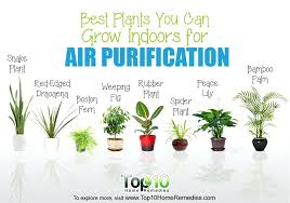 Best Plant For Office Desk Best Plants For Office Choosing The Best Indoor Plants For Your