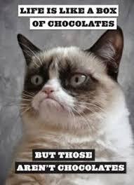 Meme Generator Grumpy Cat - pin by patsy chattley on cats vii pinterest