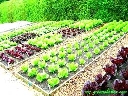 vegetable garden layout planning a vegetable garden layout free vegetable garden plans