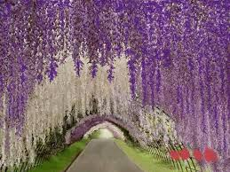 cascading tunnel of trees show your essentials creations
