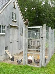 Best Backyard Chicken Coops by 17 Best Images About Chicken Coops On Pinterest Best Chicken