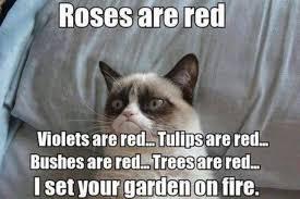 Meme Poem - grumpy cat poem funny memes