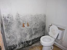 Mold In Bathtub Mold Remediation Masterdry