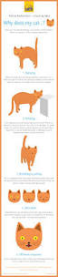 best 25 cat health ideas on pinterest cat health care cat