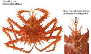 odfw recreational crab fishing crab id