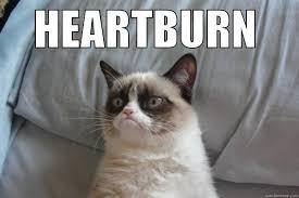 Heartburn Meme - heartburn cat quickmeme