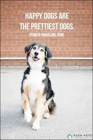 australian shepherd quotes happy dogs are the prettiest dogs