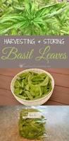 232 best growing herbs images on pinterest growing herbs herb