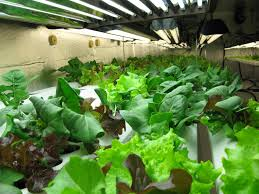 Hydroponics Vegetable Gardening by Organic Farming Atlantis Hydroponics Blog Page 2