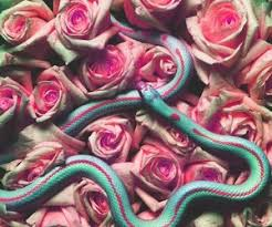 snakes and roses shared by annoyingoreenge on we it