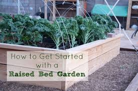 raised bed gardening how to start five little homesteaders