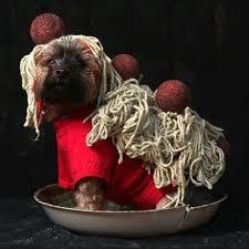Meatball Halloween Costume 10 Dogs Won U0027t Forgive Owners Halloween