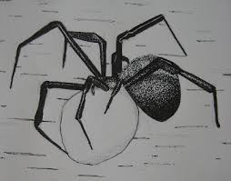 idora design oh and eh the oxymoron that is spider