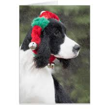 english springer spaniel christmas puppy cards invitations