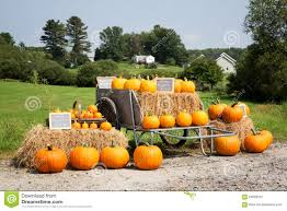 pumpkins for sale pumpkin sale stock image image of colorful many bales 60928551