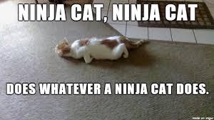 Meme Ninja - ninja cat meme on imgur