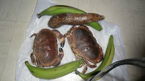 cuisiner un tourteau tourteaux ou dormeurs à la caribeña les marmites de marphyl