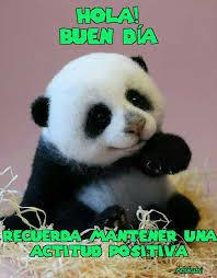 Memes De Pandas - pin by adolfo adrian on memes de buenos dias pinterest memes