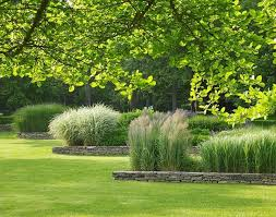 457 best ornamental grasses images on ornamental