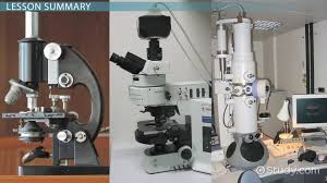 Parts Of A Compound Light Microscope Light Microscope Definition Uses U0026 Parts U0026 Lesson