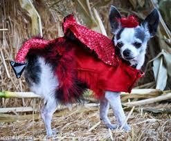 Animal Halloween Costumes 74 Pet Halloween Costumes Images Animals Pet