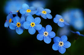 forget me not the fluco beat