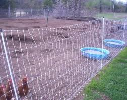 Keeping Free Range Chickens In Your Backyard Raising Chickens 2 0 No More Coop And Run