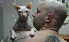 sphynx cat tattoo animals library
