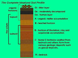 Garden Soil Types - how when and why of forest farming learning site assessment