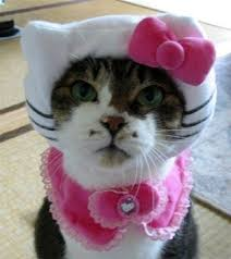 Cat Halloween Costumes Cats 28 Halloween Costumes Cats Put Smile Face