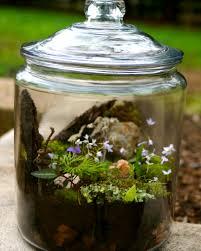 get to know your backyard build a terrarium terraria gardens